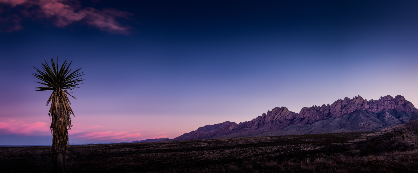 distant photo of organ mountains with cactus in foreground at dusk